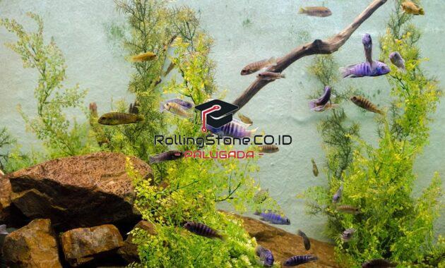 ekosistem-dan-ekologi